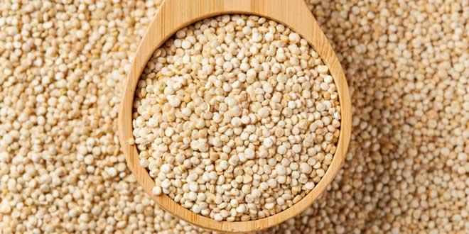 quinoa-proteina-vegetal