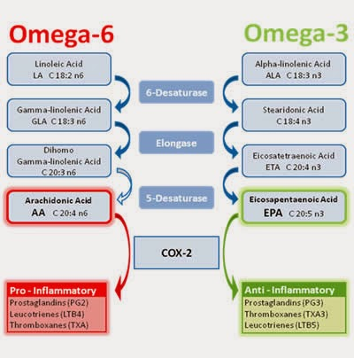 omega3vsOmega6
