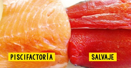 SALMON SALVAJE VS NORMAL